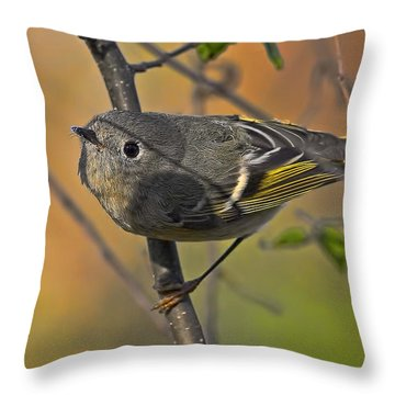 Throw Pillow featuring the photograph Curiosity by Gary Holmes