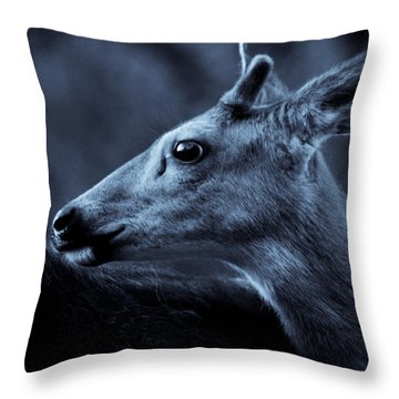 Curious  Throw Pillow by Adria Trail