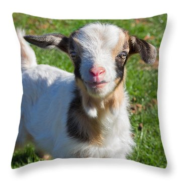 Curious Baby Goat Throw Pillow