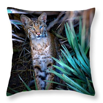 Curious Bobcat Throw Pillow by Mark Andrew Thomas