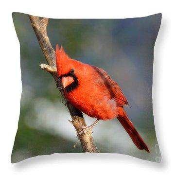 Throw Pillow featuring the photograph Curious Cardinal by Lisa L Silva