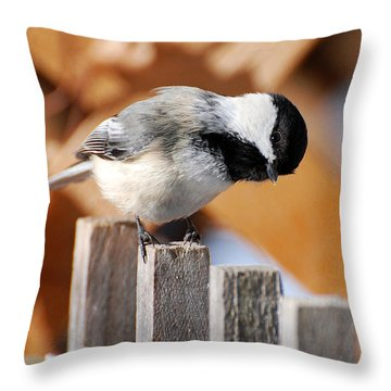 Curious Chickadee Throw Pillow