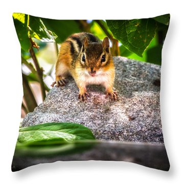 Curious Chipmunk  Throw Pillow by Bob Orsillo