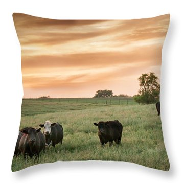 Throw Pillow featuring the photograph Curious Cows by Dawn Romine