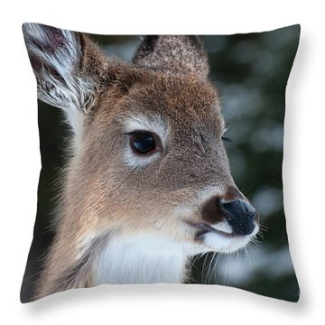 Throw Pillow featuring the photograph Curious Fawn by Bianca Nadeau