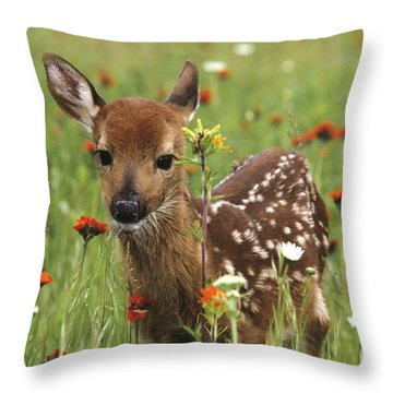 Curious Fawn Throw Pillow