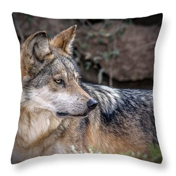 Throw Pillow featuring the photograph Curious Mexican Grey Wolf by Elaine Malott