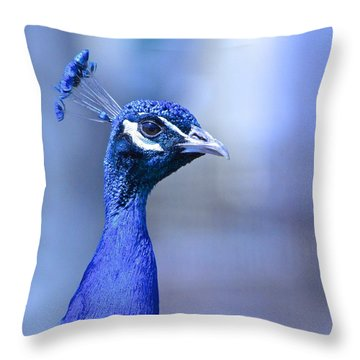 Curious Peacock Throw Pillow by Rita Mueller