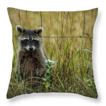 Curious Raccoon Throw Pillow