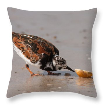 Curious Turnstone Throw Pillow