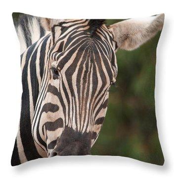 Curious Zebra Throw Pillow
