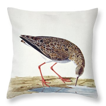 Curlew Sandpiper Throw Pillow