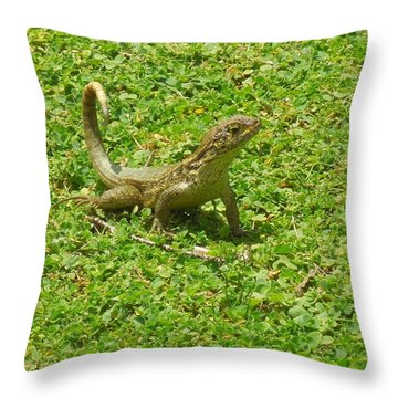 Curly-tailed Lizard Throw Pillow