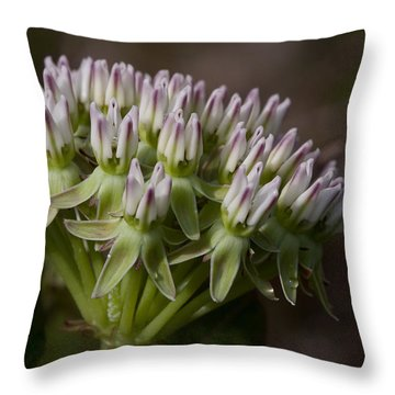 Throw Pillow featuring the photograph Curtiss' Milkweed #3 by Paul Rebmann