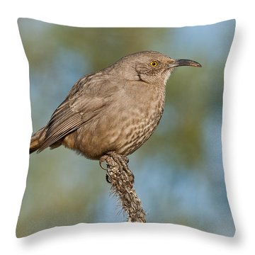 Curve-billed Thrasher Throw Pillow by Jeff Goulden