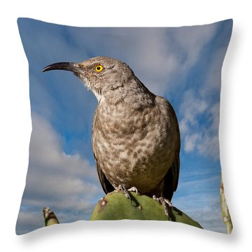 Curve-billed Thrasher On A Prickly Pear Cactus Throw Pillow by Jeff Goulden