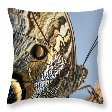 Curve Of A Butterfly Throw Pillow by Sonya Lang