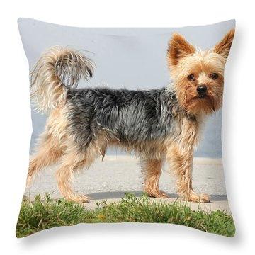 Cut Little Dog In The Sun Throw Pillow