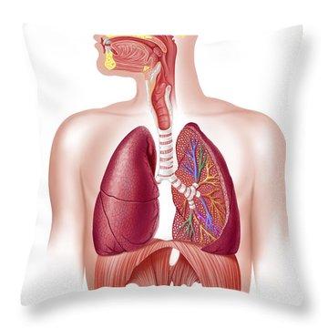 Cutaway Diagram Of Human Respiratory Throw Pillow