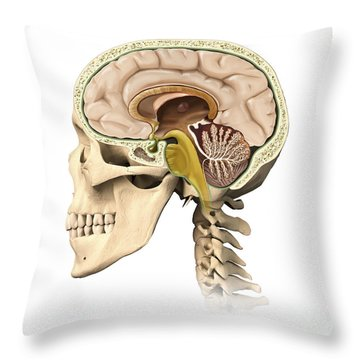 Cutaway View Of Human Skull Showing Throw Pillow by Leonello Calvetti