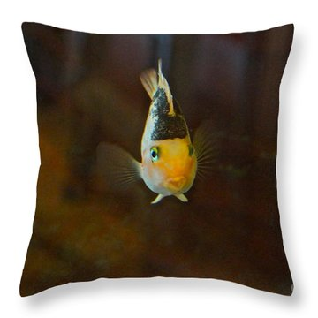 Cute And Content Throw Pillow by Byron Varvarigos