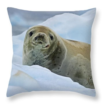 Cute And Cuddly... Throw Pillow by Nina Stavlund