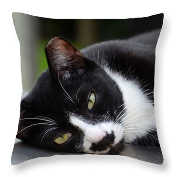 Cute Black And White Tuxedo Cat With Nipped Ear Rests  Throw Pillow