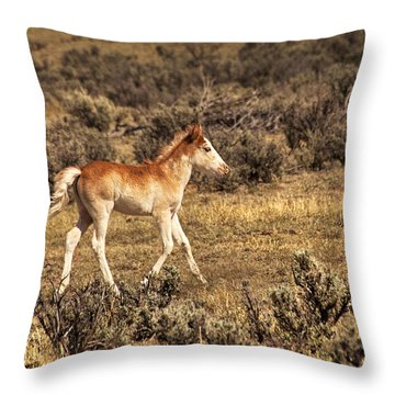 Cute Colt Wild Horse On Navajo Indian Reservation  Throw Pillow by Jerry Cowart