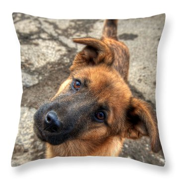 Cute Dog Closeup Throw Pillow