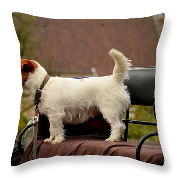 Cute Dog On Carriage Seat Bruges Belgium Throw Pillow by Imran Ahmed