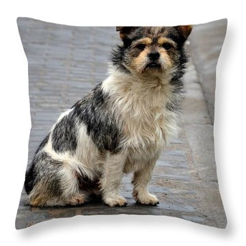 Cute Dog Sits On Pavement And Stares At Camera Throw Pillow