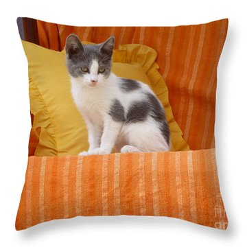 Throw Pillow featuring the photograph Cute Kitty by Vicki Spindler