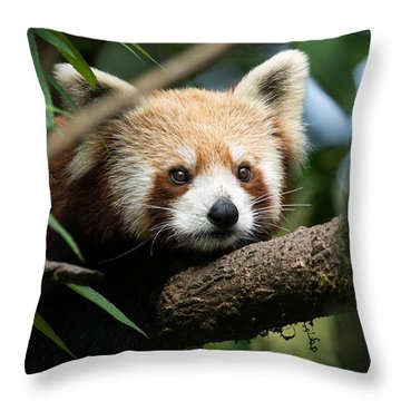 Cute Panda Throw Pillow by Fotosas Photography