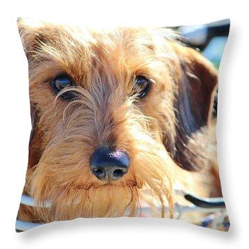 Cute Puppy Throw Pillow by Cynthia Guinn