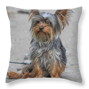 Cute Yorki Throw Pillow by Jivko Nakev