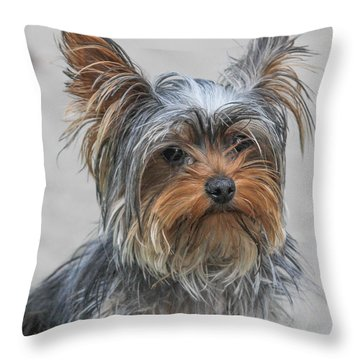 Cute Yorky Portrait Throw Pillow
