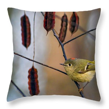 Cuteness Throw Pillow by Gary Holmes