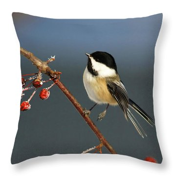 Cutest Of Cute Throw Pillow by Deborah Benoit