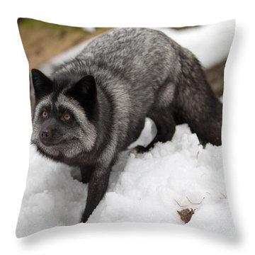 Cutie Throw Pillow
