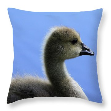 Cygnet Throw Pillow by Alyce Taylor