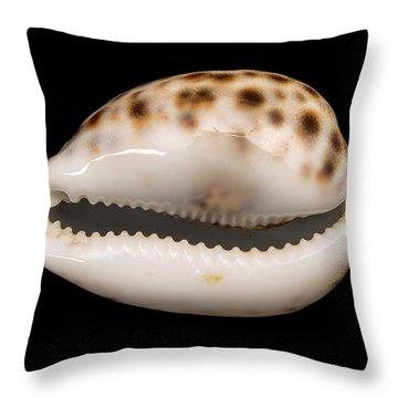 Cowry Throw Pillows