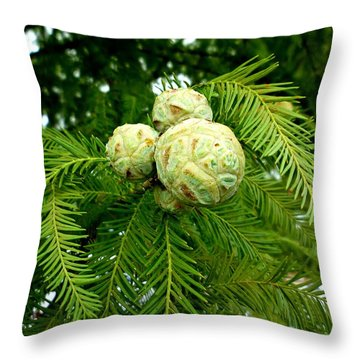 Throw Pillow featuring the photograph Cypress by Pete Trenholm