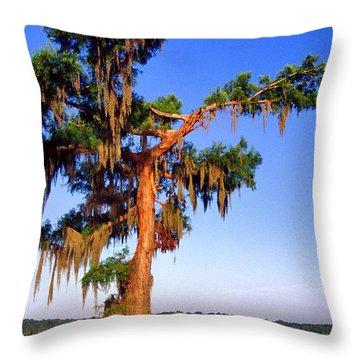 Cypress Tree Draped In Spanish Moss Throw Pillow by Thomas R Fletcher