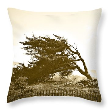 Cypress Trees In Monterey Throw Pillow