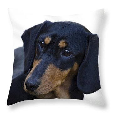 Dachshund Throw Pillow by Linsey Williams