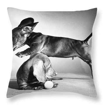 Dachshund Puppies Playing Throw Pillow by ME Browning