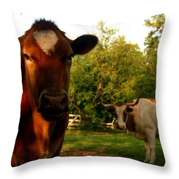 Dads Cows Throw Pillow by Lon Casler Bixby