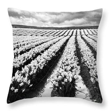 Daffodil Fields II Throw Pillow