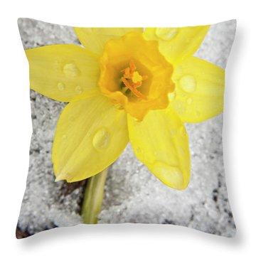 Daffodil In Spring Snow Throw Pillow by Adam Romanowicz