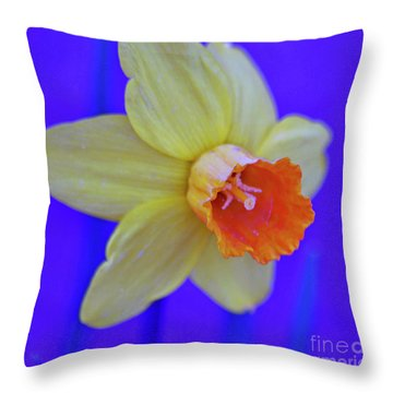 Throw Pillow featuring the photograph Daffodil On Blue by Juls Adams